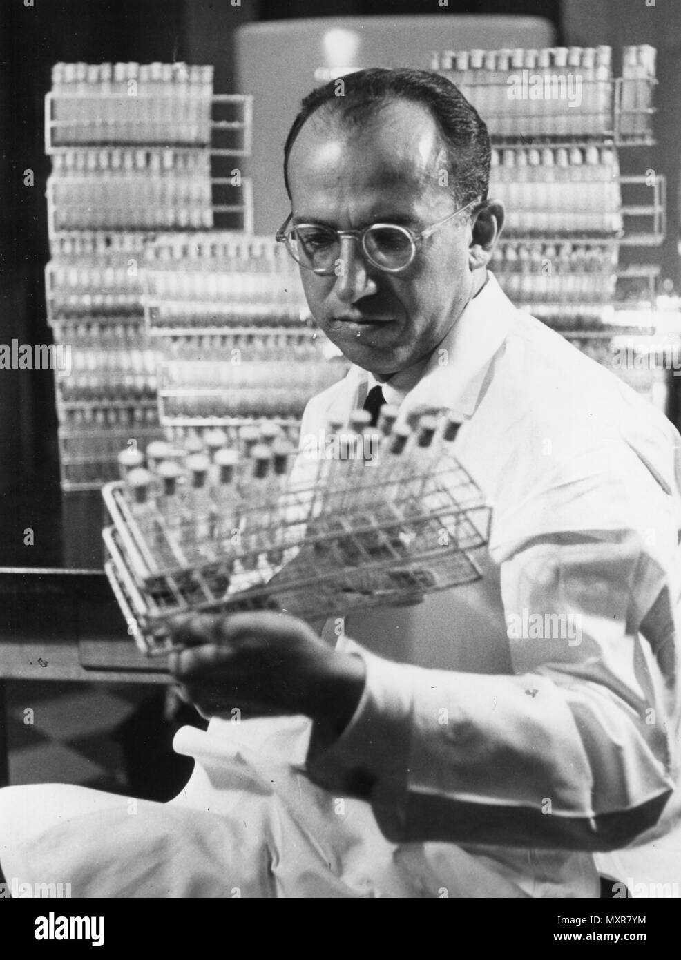 Dr. Jonas E. Salk, the discoverer of the polio vaccine, in his laboratory, 1955. - Stock Image
