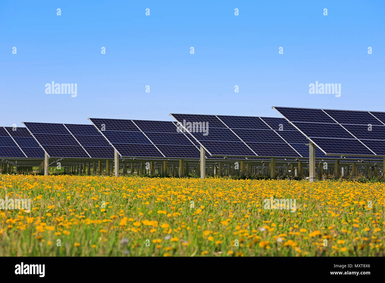 Solar panels on an open green field with yellow flowers and blue sky in the spring. Stock Photo