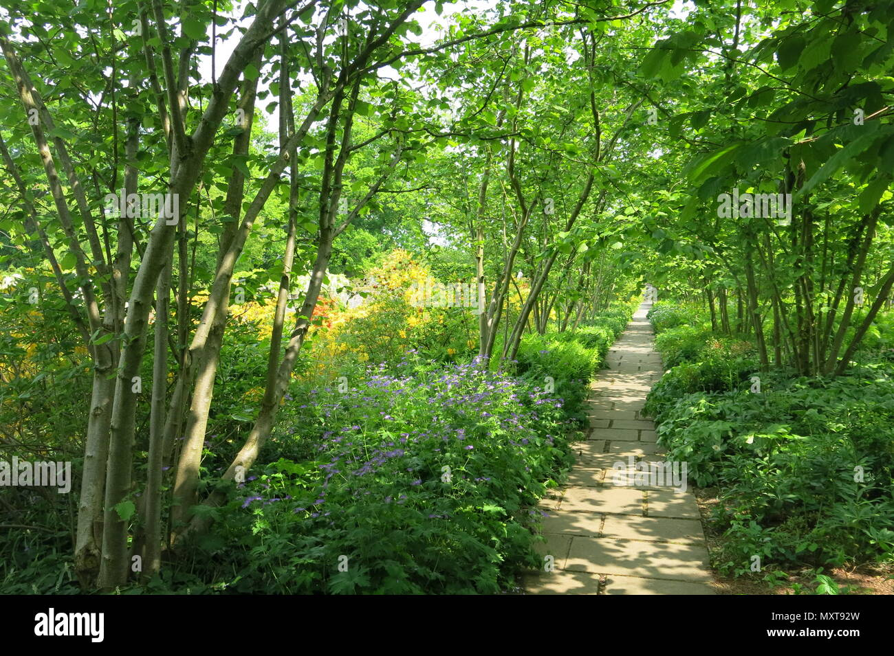 A shady pathway leads you through one of the garden rooms at Sissinghurst Castle Gardens, Vita Sackville-West's garden in Kent - Stock Image
