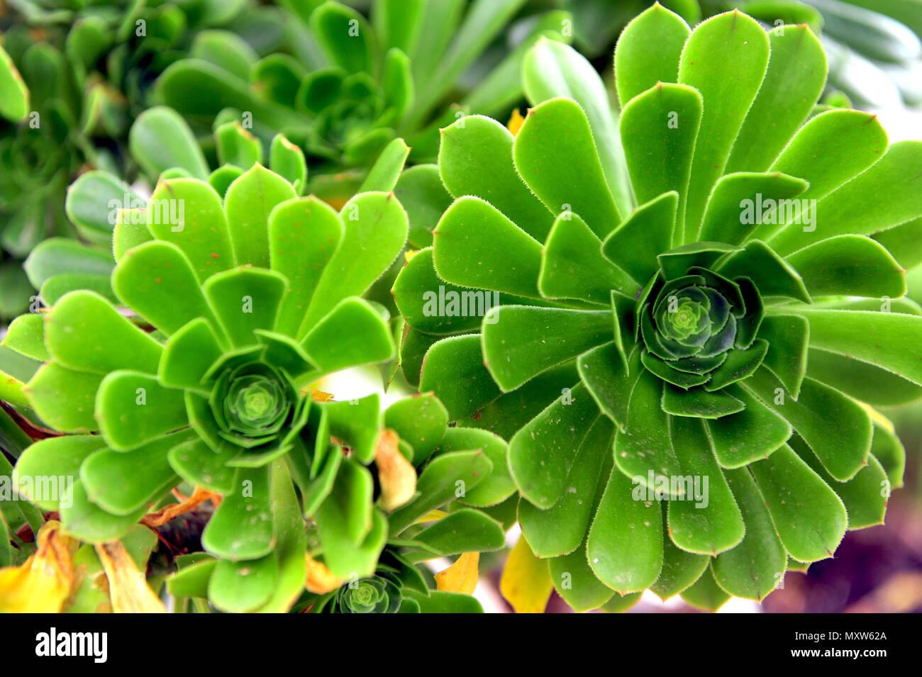 Green Geometric Mediterranean Plants In Bloom Stock Photo