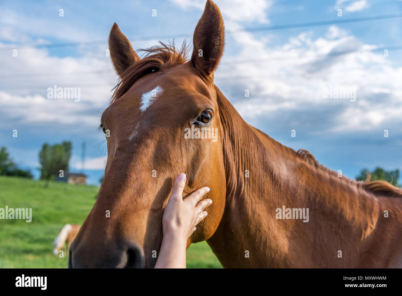 The hand of a woman is stroking a horse at sunset. - Stock Image