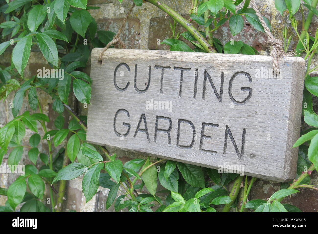 A rustic wooden signboard, hanging on a rope, saying CUTTING GARDEN - Stock Image