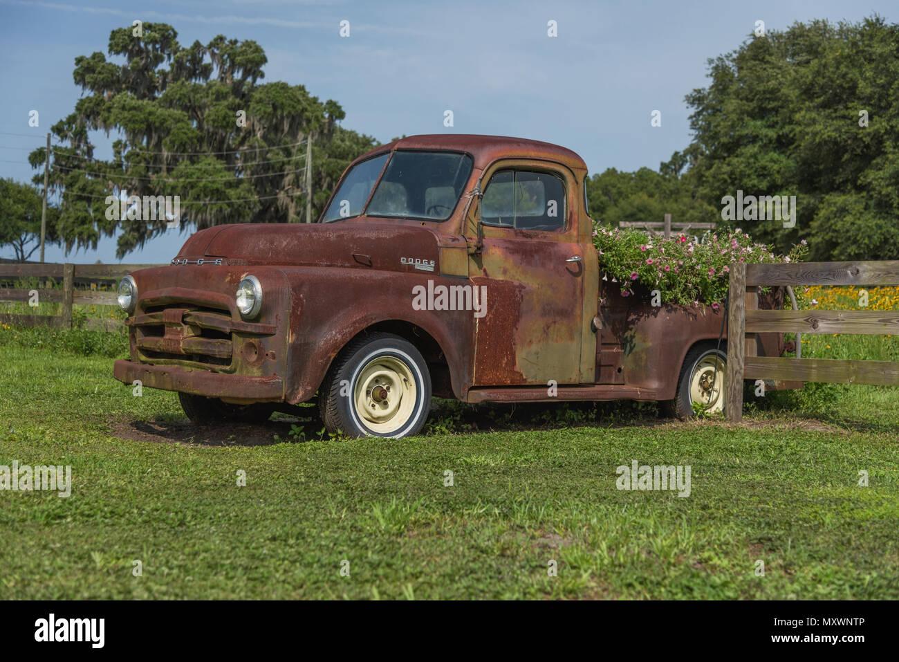 Old Dodge Trucks >> Old Dodge Pickup Truck Stock Photos Old Dodge Pickup Truck