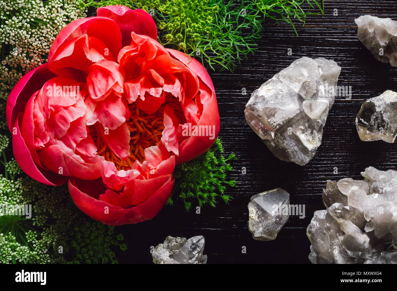 Magenta Peony on Dark Table with Quartz Clusters on Dark Table - Stock Image