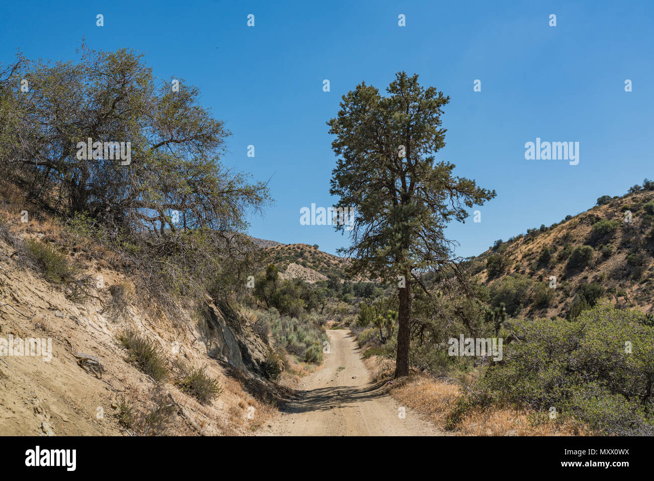 Dirt trail leads down into a wooded California canyon in the Mojave Desert of the southwest. - Stock Image