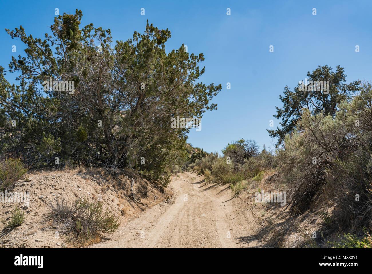 Growing desert brush living in the wilderness of California's Mojave Desert. - Stock Image