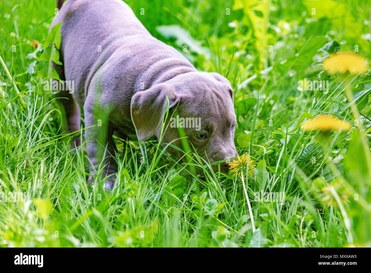Cute Little Dog Sitting Among Yellow Flowers In Green Grass In The