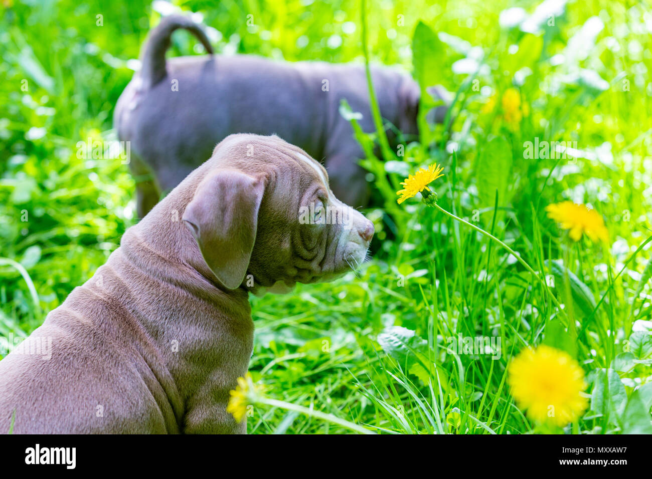 Cute little dogs sitting among yellow flowers in green grass in the cute little dogs sitting among yellow flowers in green grass in the park outdoors wallpaper mightylinksfo