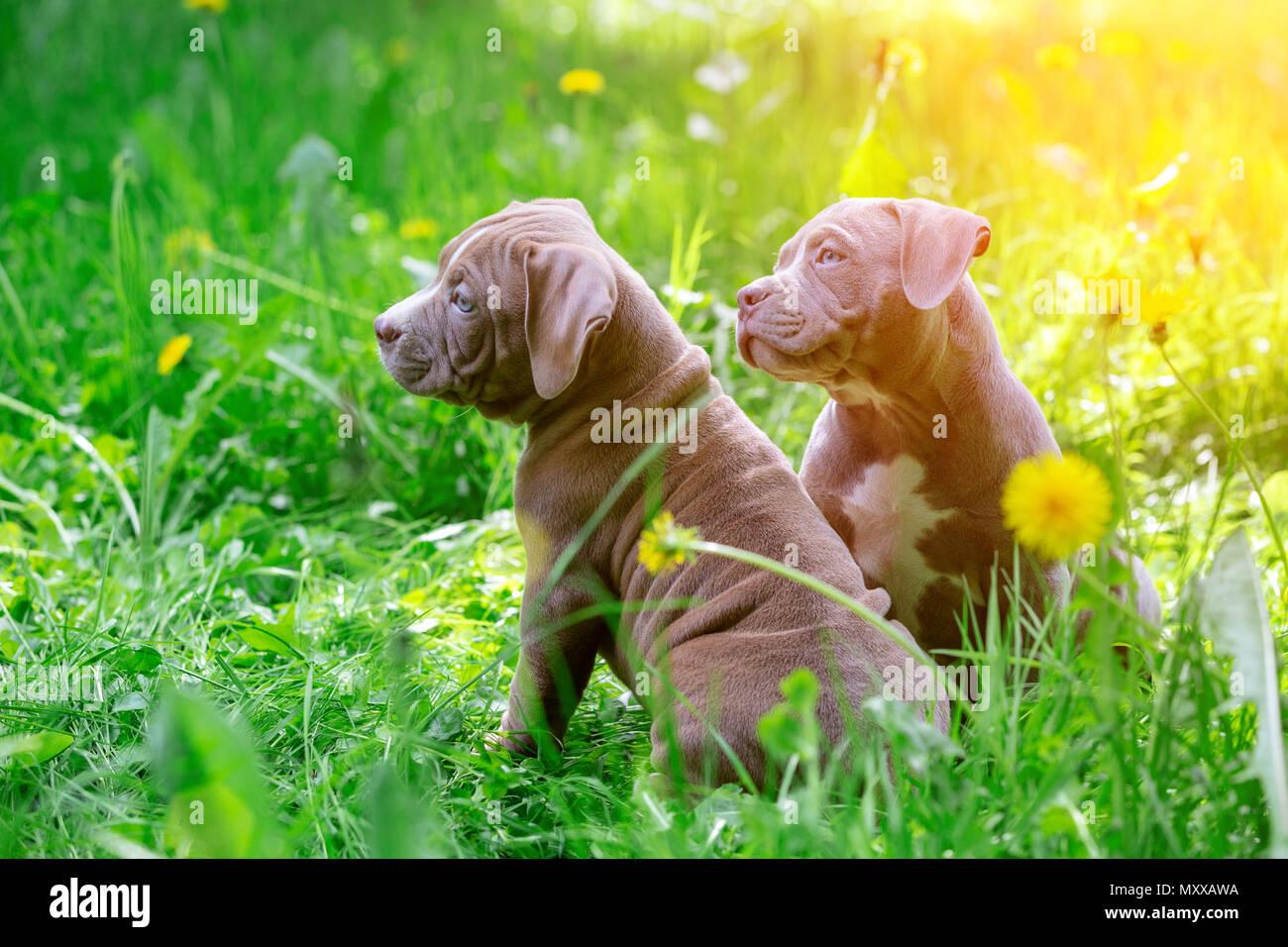 Cute little dogs sitting among yellow flowers in green grass in the cute little dogs sitting among yellow flowers in green grass in the park outdoors wallpaper mightylinksfo