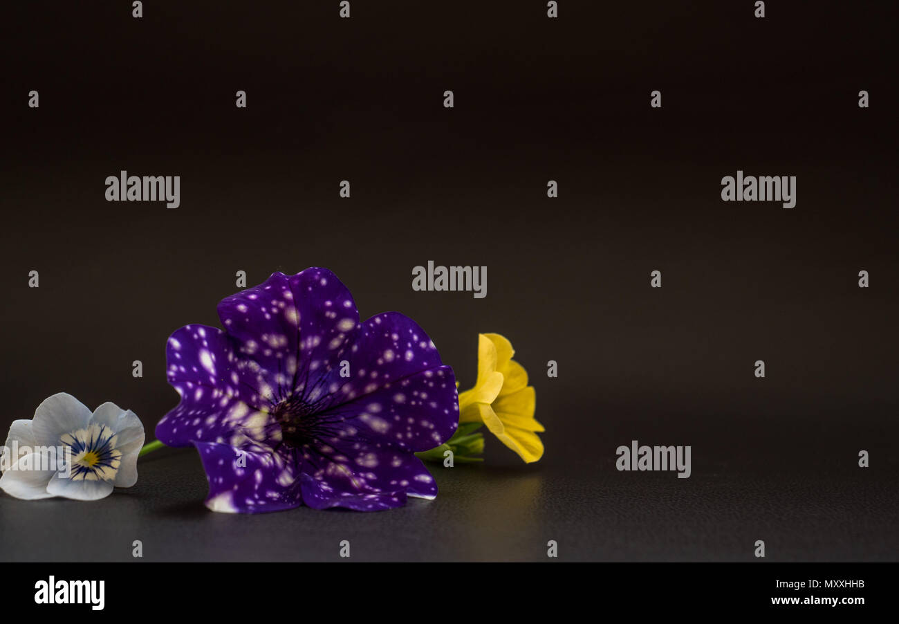 crazy space flower, light blue flower and yellow flower - Stock Image