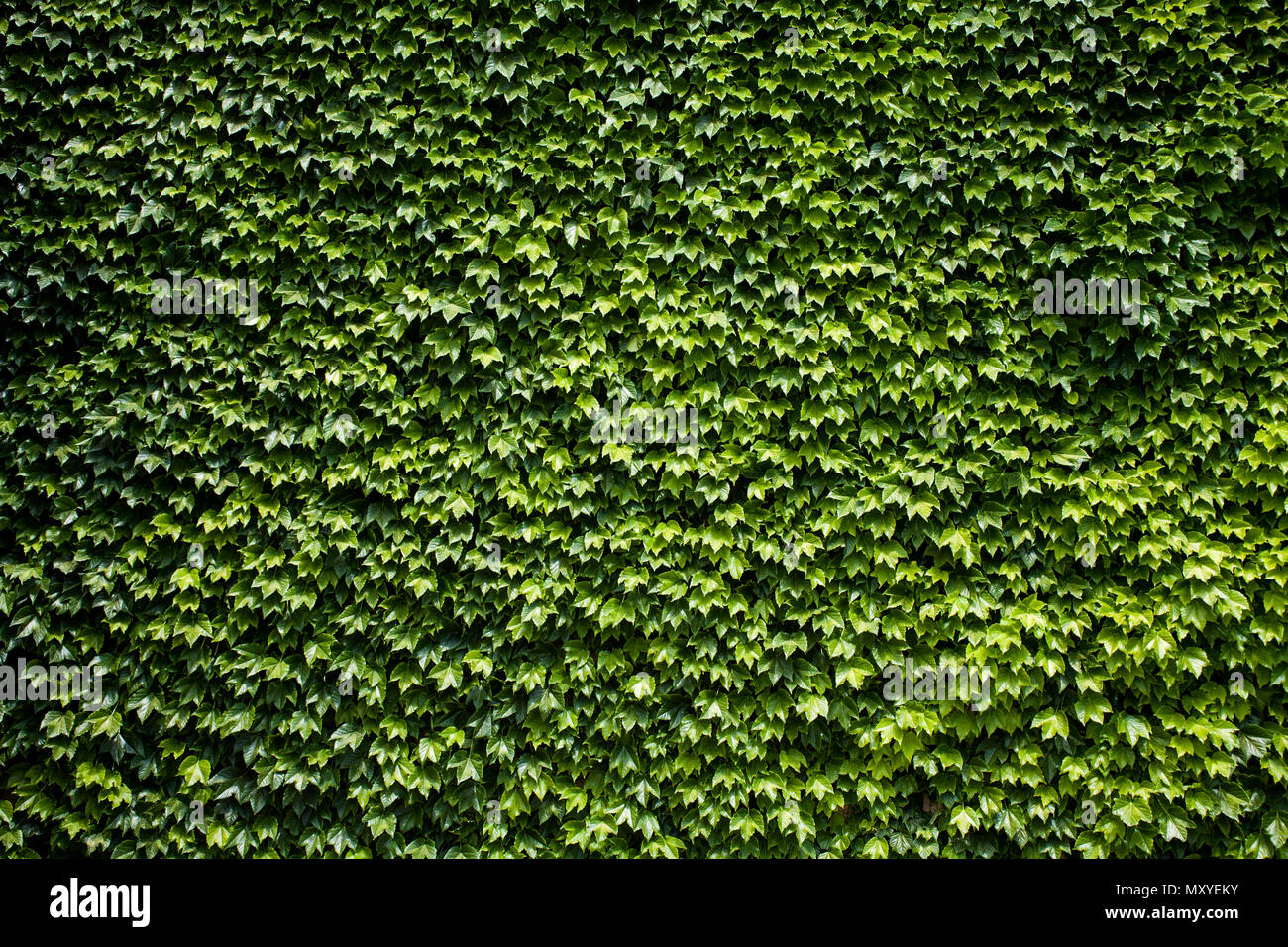 Bush Seamless Texture Background Stock Photos & Bush ...