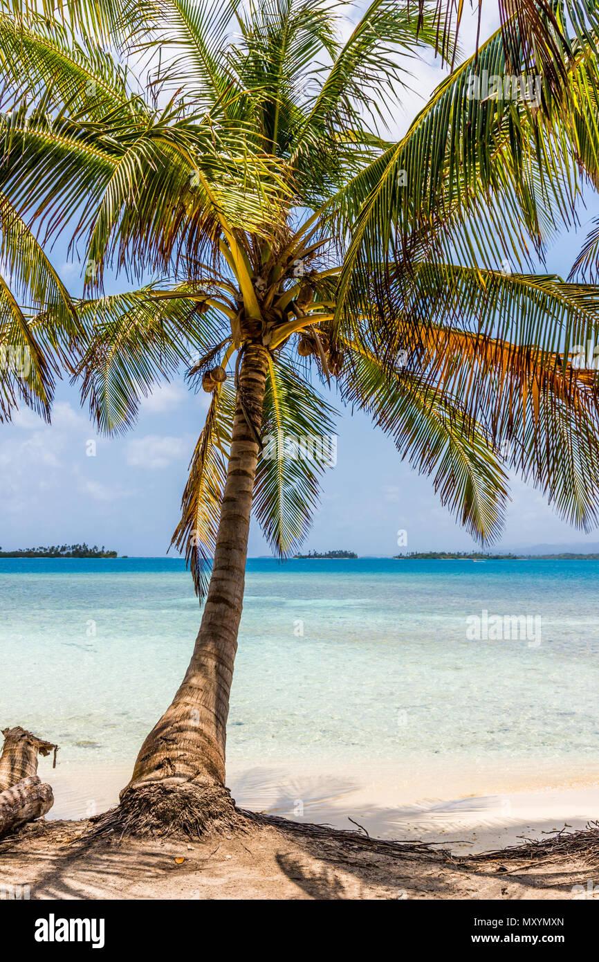 san Blas islands in Panama - Stock Image