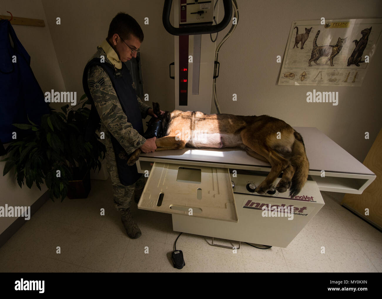 Staff Sgt. David, a military working dog handler with the 49th Security Forces Squadron, assists his military working dog, Dylan, during an x-ray scan at the veterinary clinic at Holloman Air Force Base, N.M., on Dec. 13, 2016. Four of Holloman's MWDs are battling health and medical related issues. To prevent and combat illness, the dogs routinely attend dental and medical checkups at the veterinary clinic on base. (Last names are being withheld due to operational requirements. U.S. Air Force photo by Airman 1st Class Alexis P. Docherty) - Stock Image