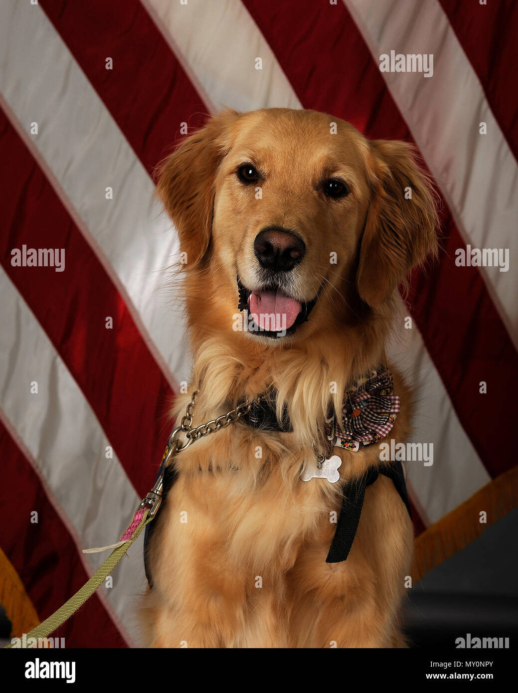 Belle A Therapy Dog Regularly Volunteers At The Eielson Air Force