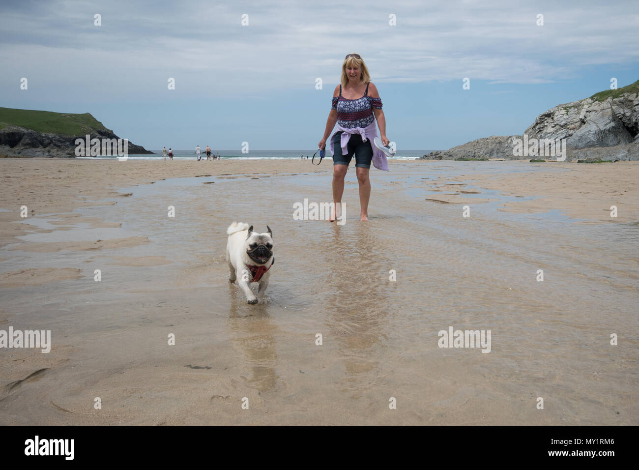 Older woman walking her pug dog on the beach at Polly Joke near Crantock in Cornwall - Stock Image