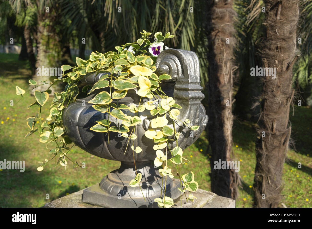 Sochi, Russia-October 7, 2016: Silver vase with plants on the background of nature in the arboretum. - Stock Image
