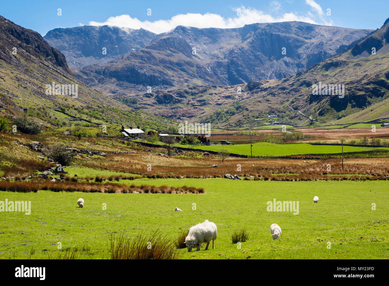 View up Nant Ffrancon valley to Glyderau mountains with sheep grazing in country fields in Snowdonia National Park. Ogwen, Bethesda, North Wales, UK - Stock Image