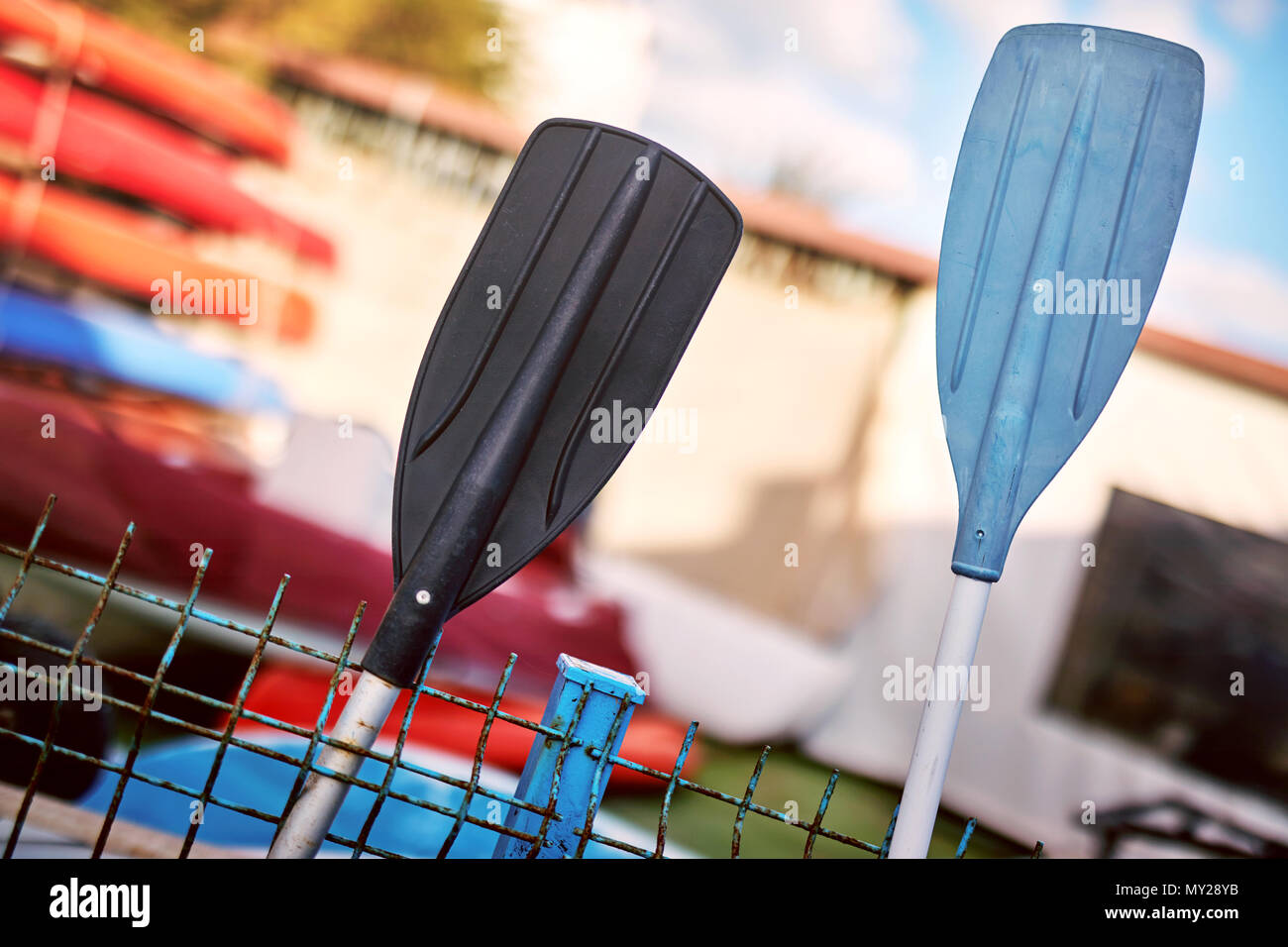Black and blue oars for boat and canoe paddle in front of a water sport center. Canoes in the background. - Stock Image