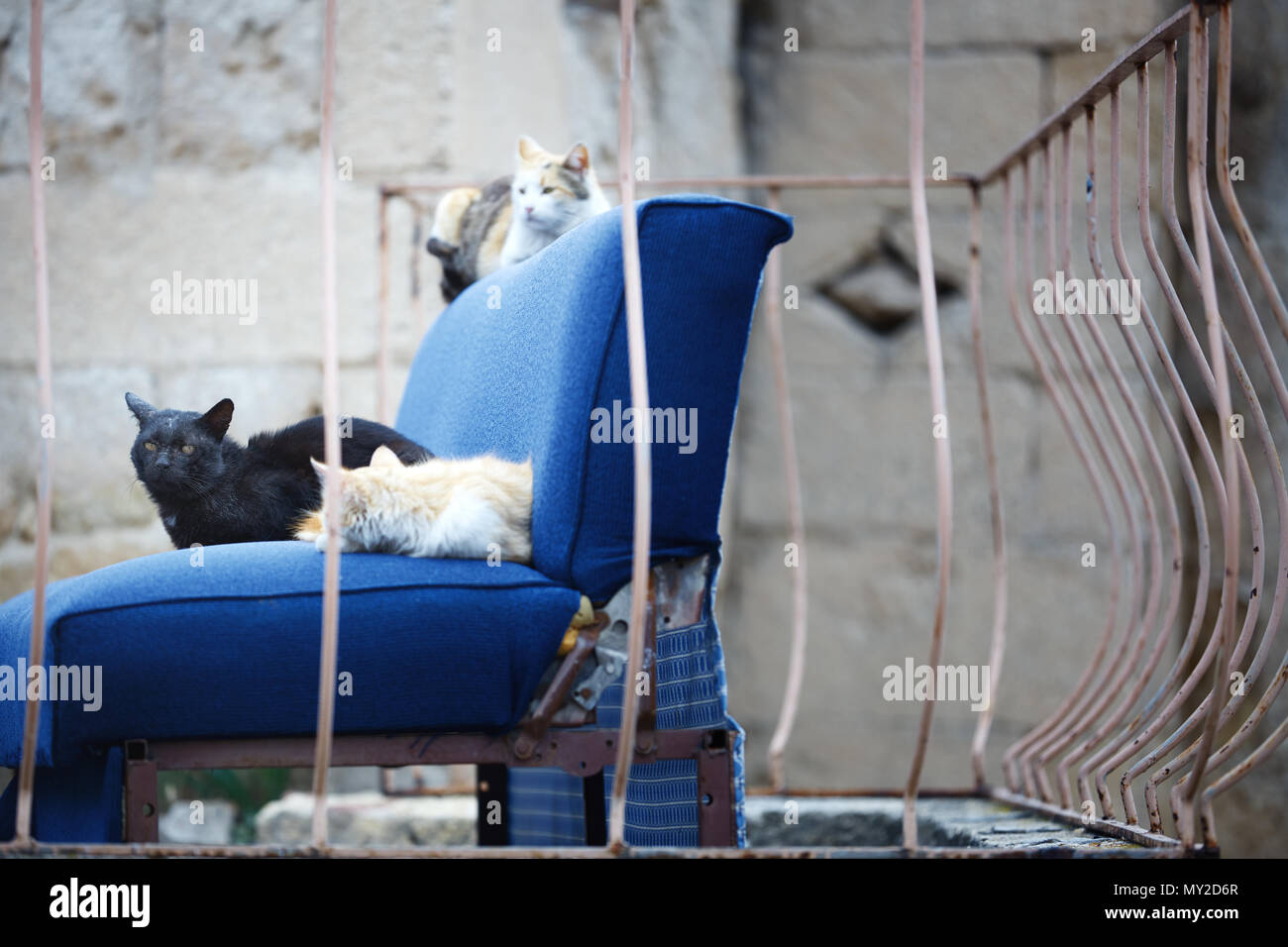 Three undomesticated cats on a blue abandoned arm-chair. Mexico - Stock Image