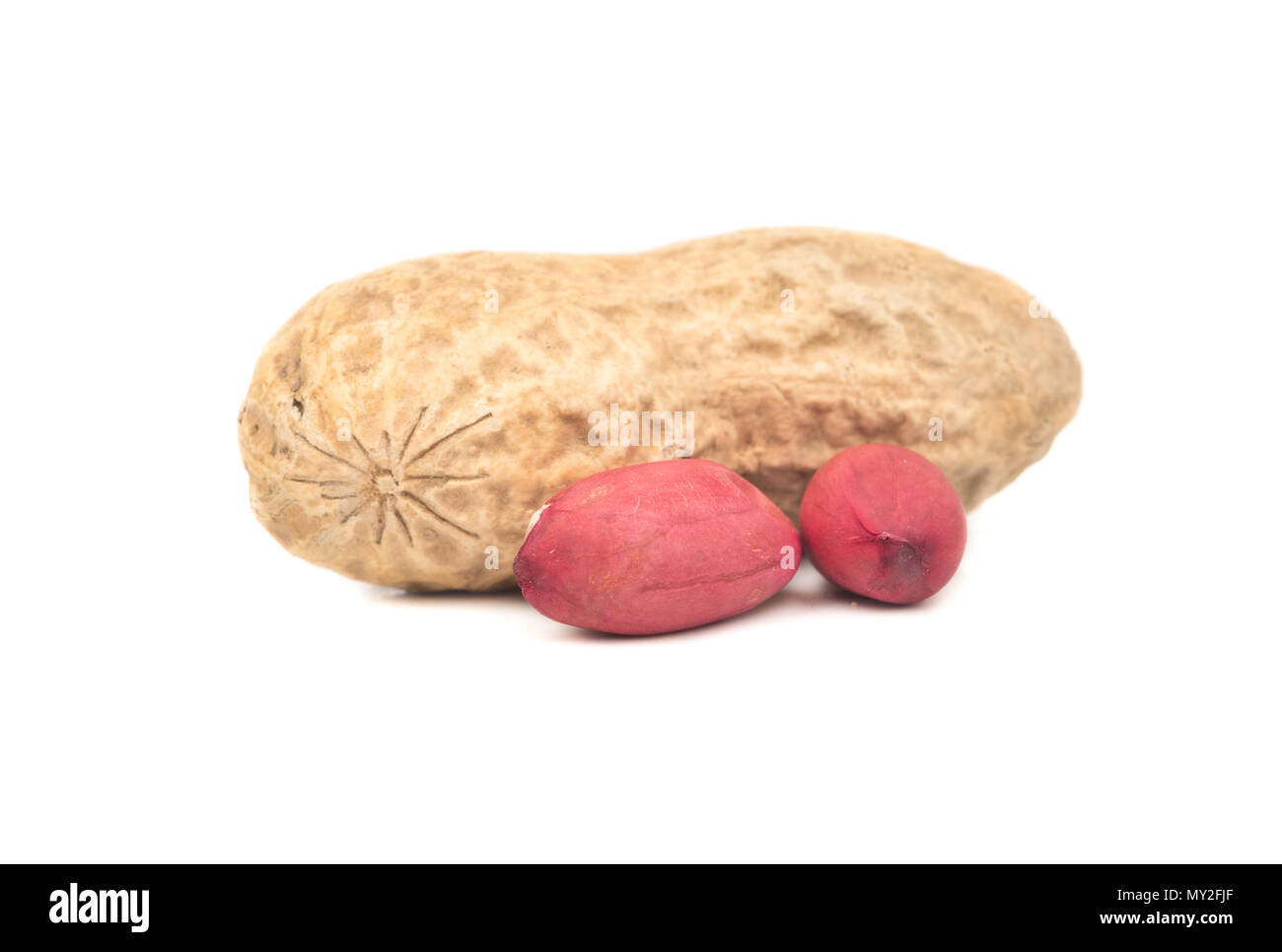 Peanut in shell with two cores on a white background - Stock Image