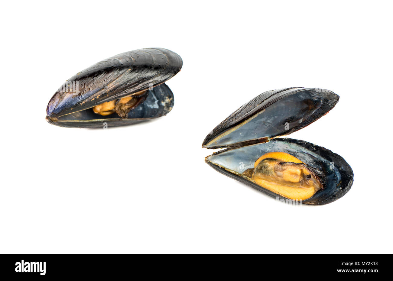 Couple open cooked mussels isolated on white background - Stock Image