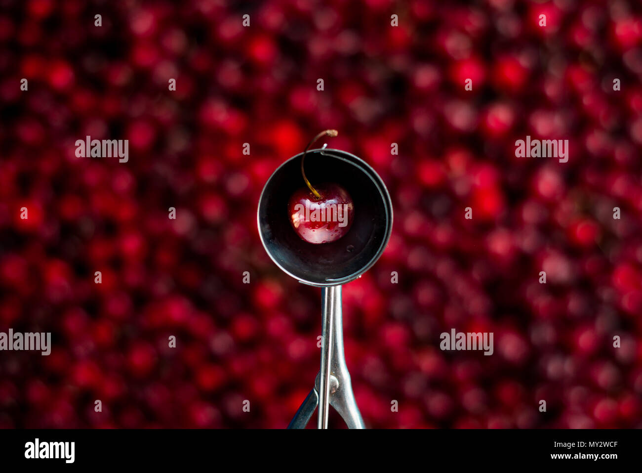 Fresh cherry in an ice cream spoon on out of focus berry background. Making ice cream concept with copy space. - Stock Image