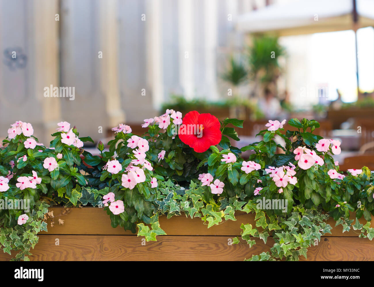 Beautiful Summer Flowers In A Pot Outside Restaurant In Europe Stock