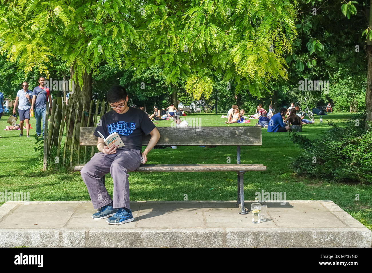 A young adult male sits on a park bench reading a book on a hot, sunny day in Furnival Gardens, Hammersmith, London. - Stock Image