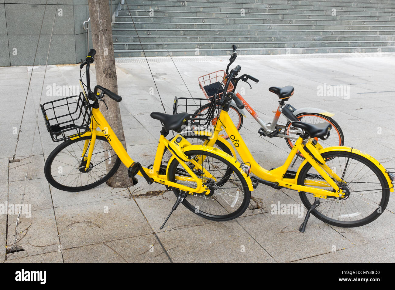 Station-free bike sharing yellow ofo bikes on the pavement in Singapore - Stock Image