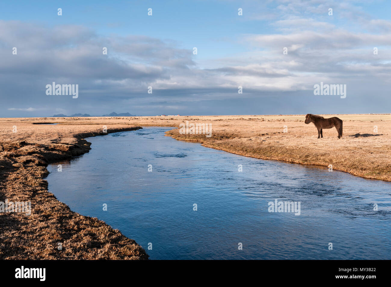 South Iceland. An Icelandic horse by the Holtsá river, just south of  Eyjafjallajökull, seen in the early morning from the Ring Road - Stock Image