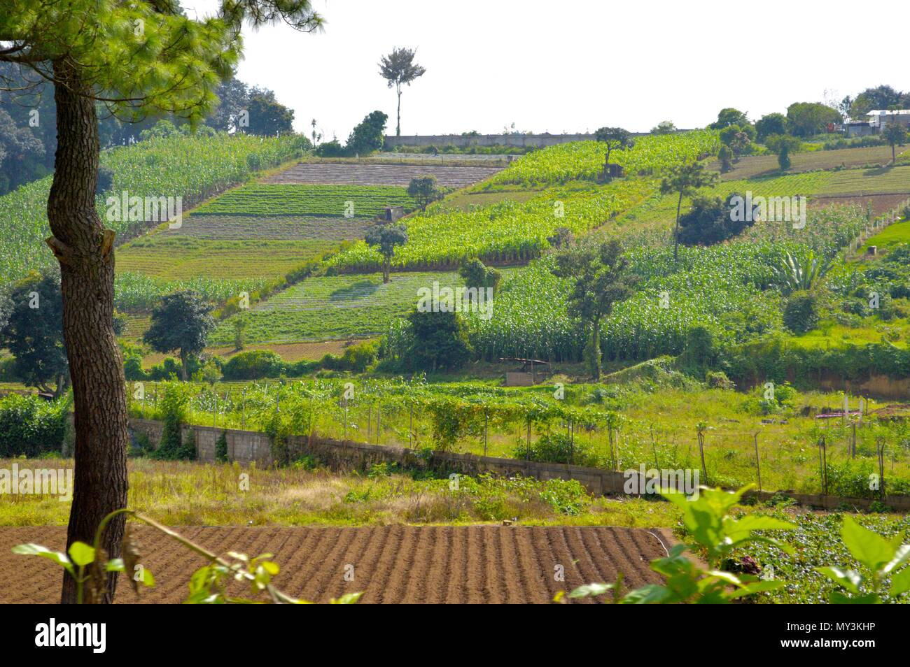 Many crops at Guatemalan roads - Stock Image