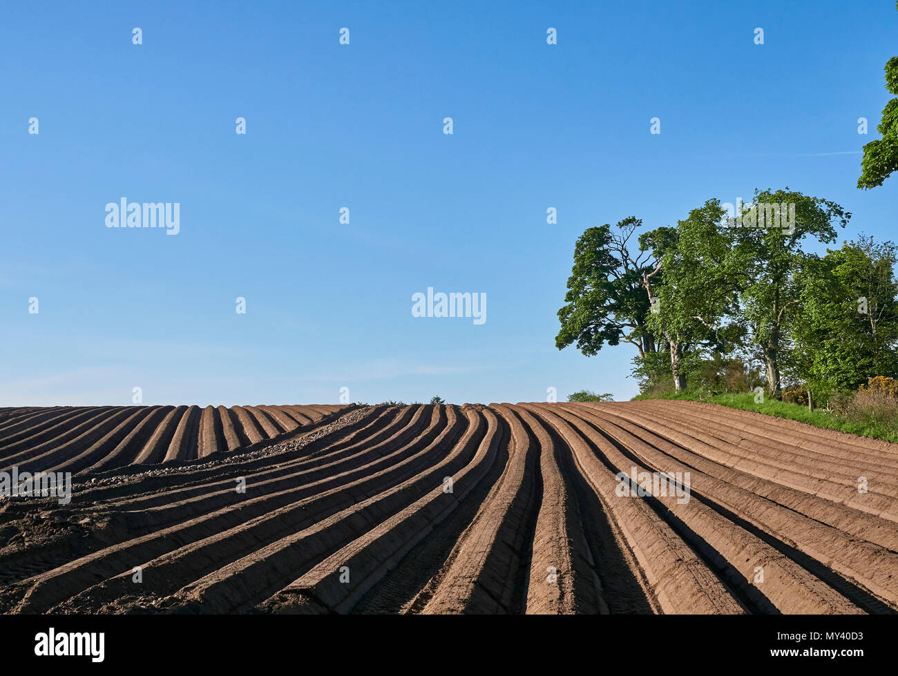 Ploughed Potato Furrows in a Scottish Field near the small Village of Whigstreet in Angus, Scotland. - Stock Image
