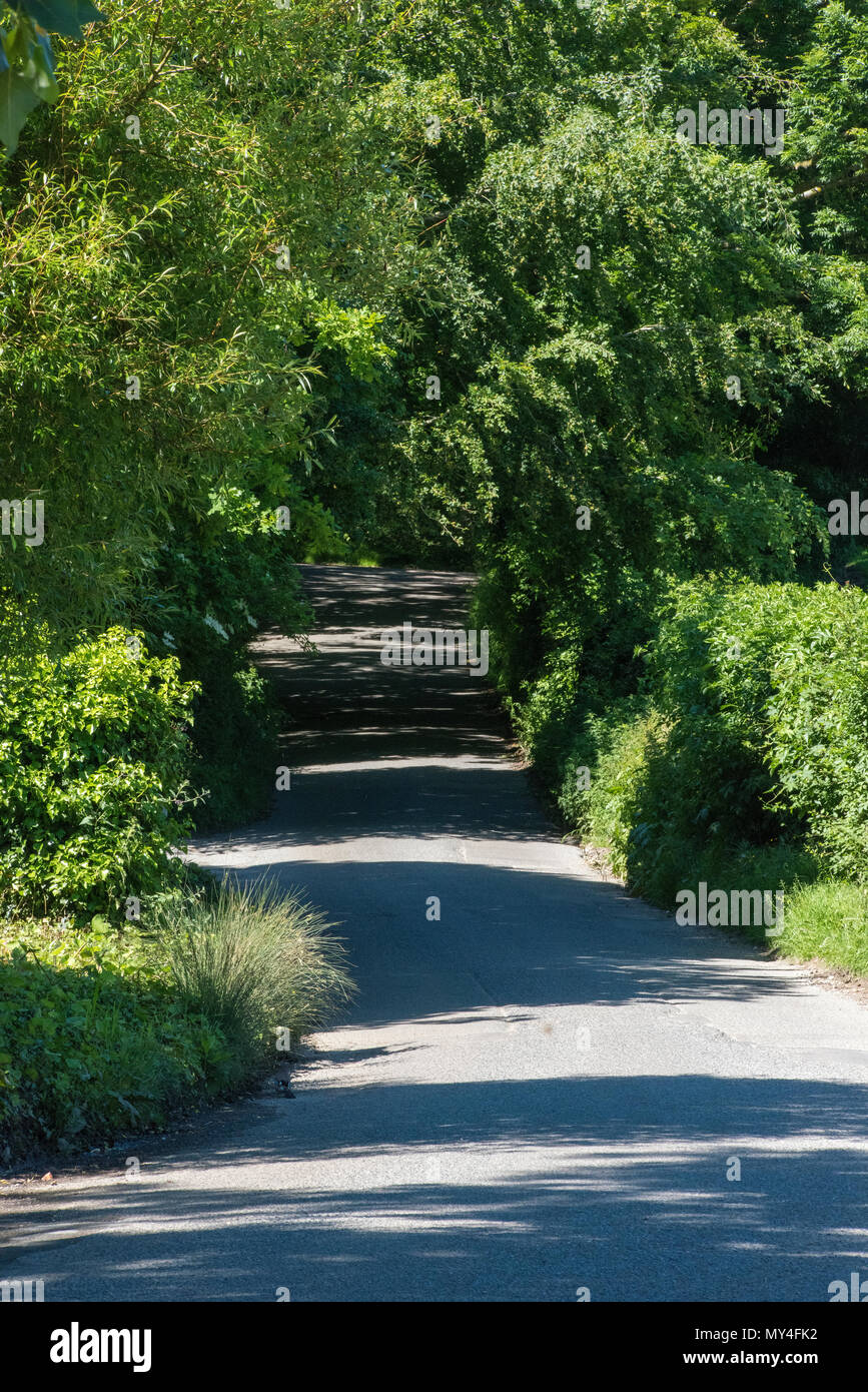 a country lane or road in the middle of summer with green trees either side and shaddows across the road. english country lanes and byways in summer. - Stock Image