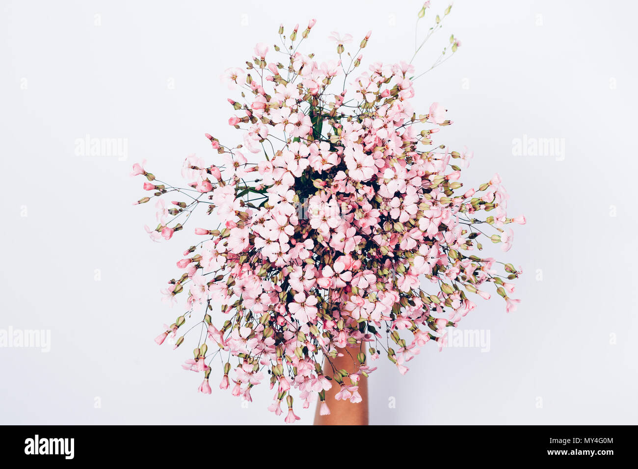 Female S Hand Holding Bouquet Of Pink Wildflowers On White Background Top View Festive Flat Lay Floral Composition Stock Photo Alamy