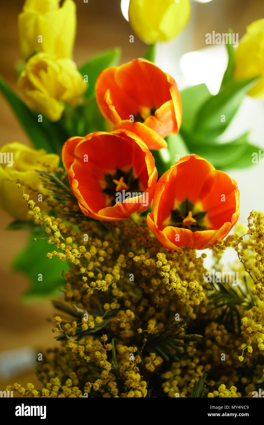 Flower Bouquet Of Yellow Mimosa Yellow And Red Tulips Spring Mood