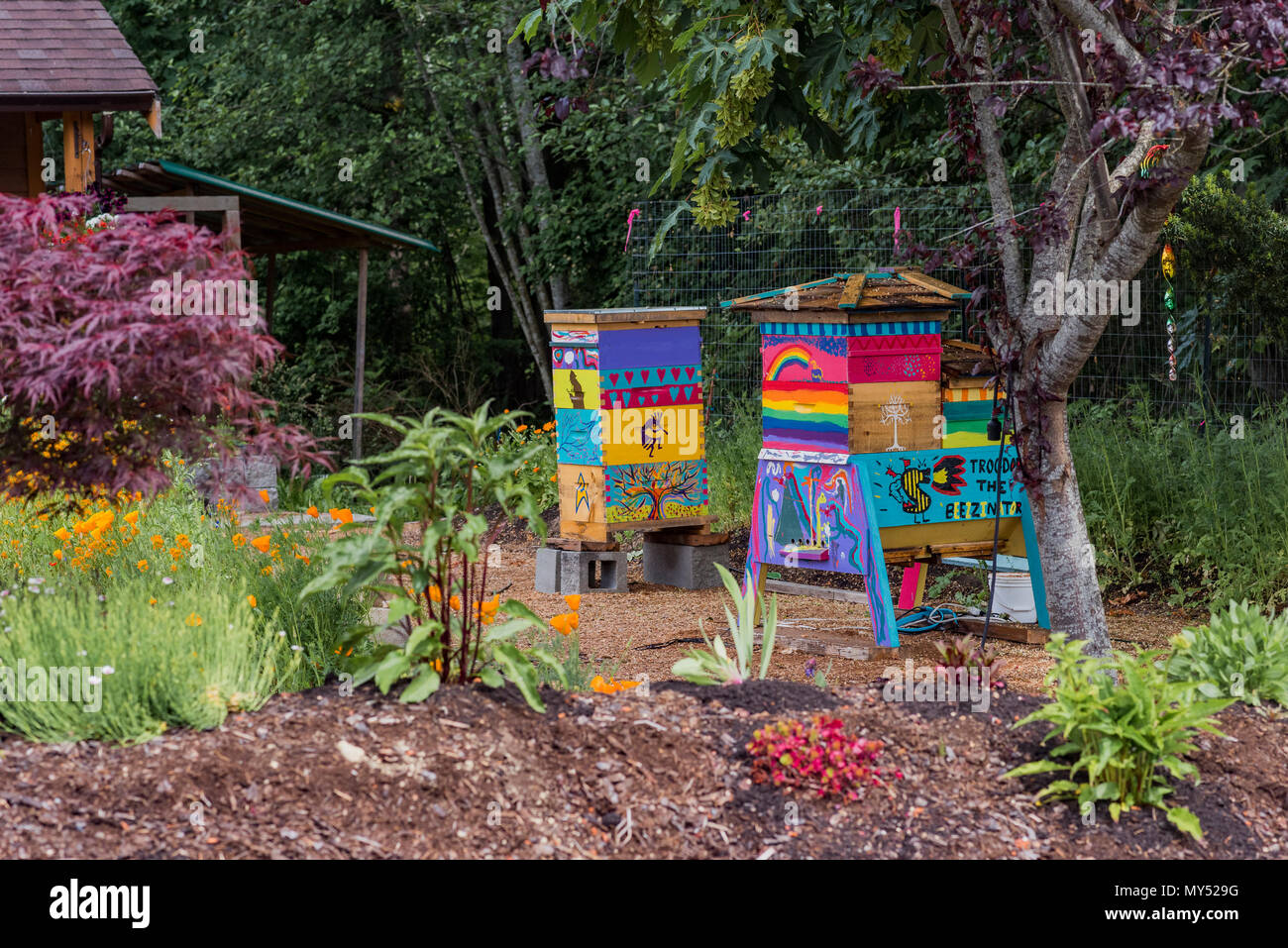 Colourful painted bee hives, Union Bay, Vancouver Island, British Columbia, Canada. - Stock Image