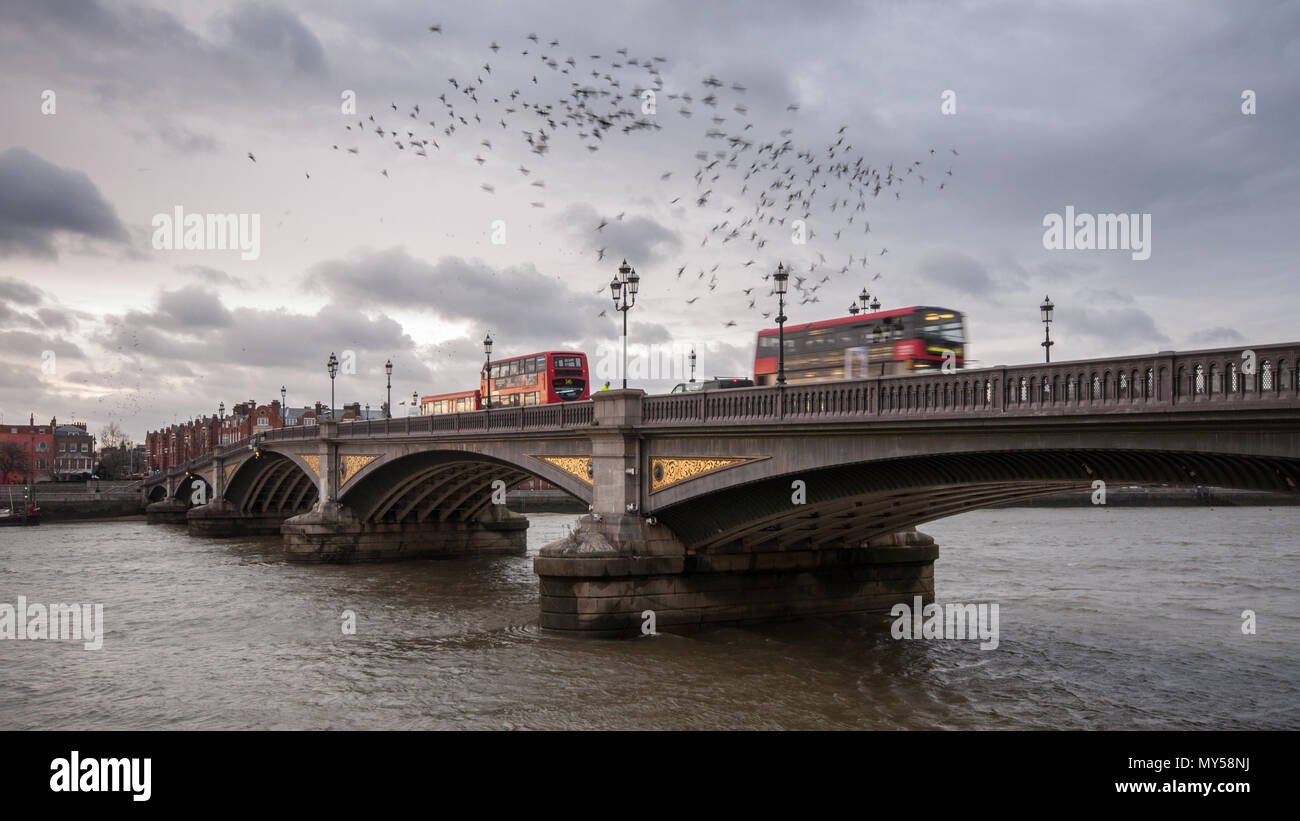 London, England, UK - March 11, 2013: Starlings flock in a murmuration over the River Thames as buses cross the Battersea Bridge. - Stock Image
