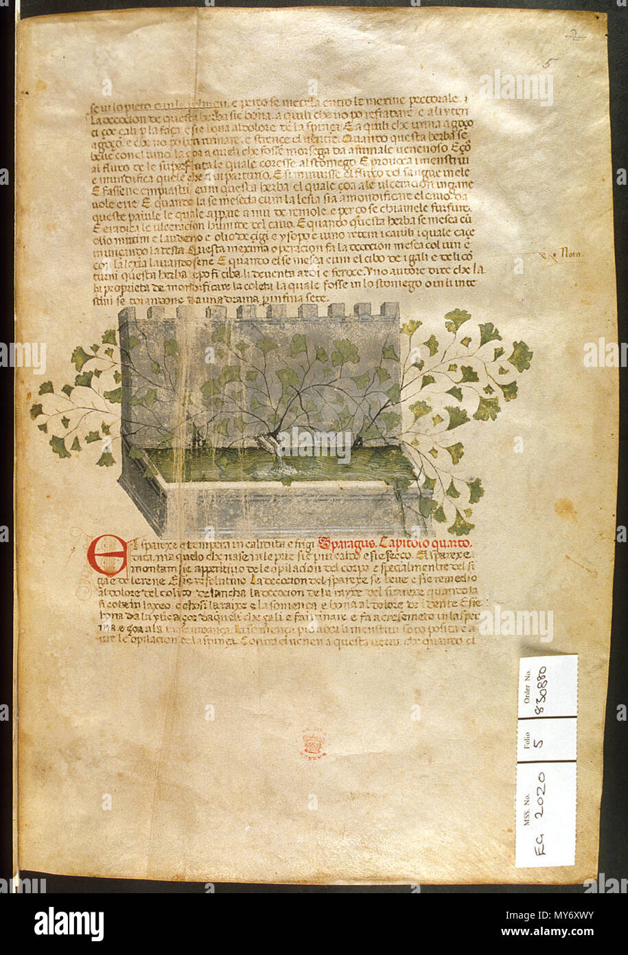 . English: arapion the Younger, Translation of the herbal (The 'Carrara Herbal'), including the Liber agrega, Herbolario volgare; De medicamentis, with index (ff. 263-265) Italy, N. (Padua); between c. 1390 and 1404 . between c. 1390 and 1404. An Italian translation, possibly from a Latin translation, of a treatise orginally written in Arabic by Serapion the Younger (Ibn Sarabi, likely 12th century). 99 Carrara Herbal05 - Stock Image
