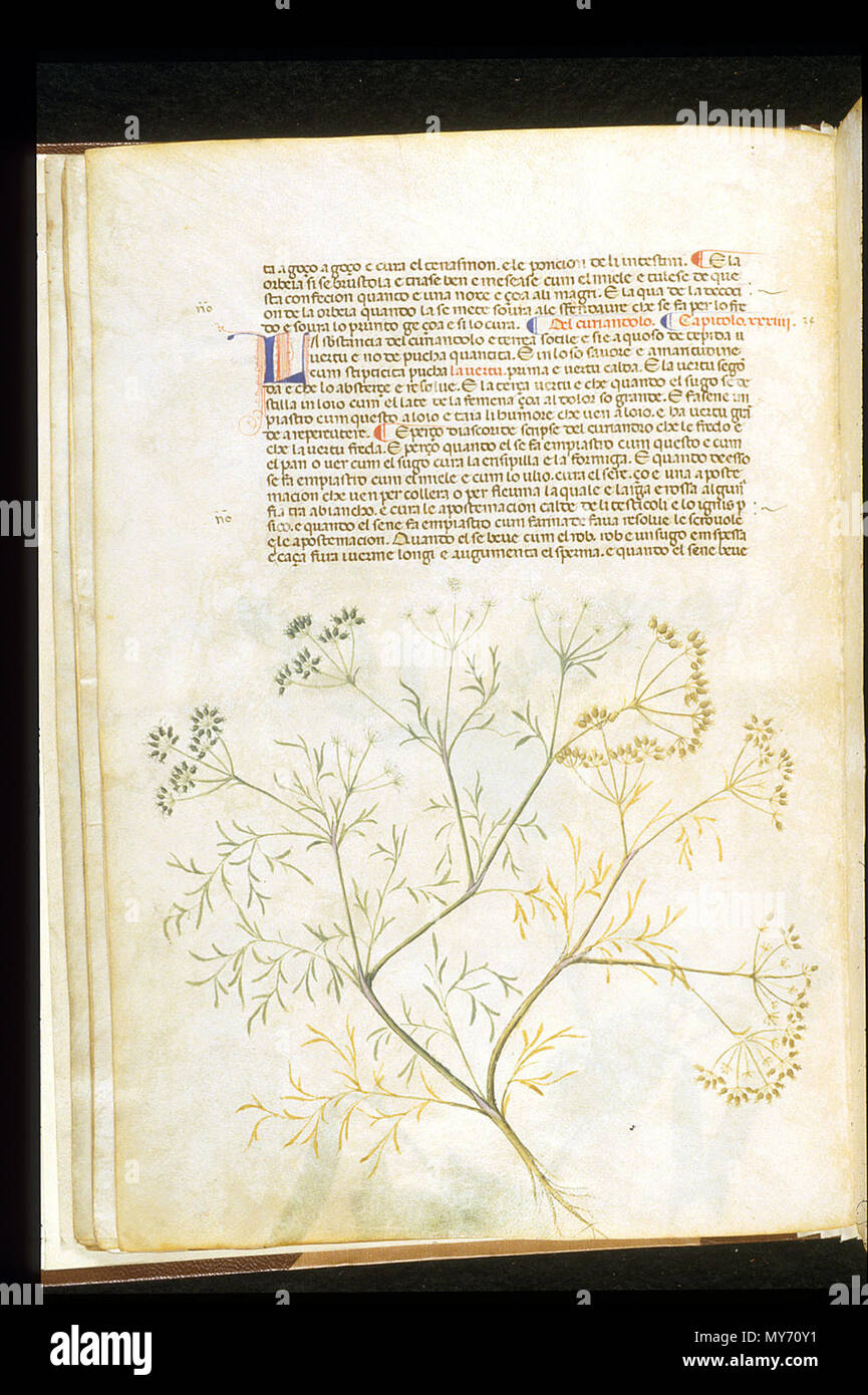 . English: arapion the Younger, Translation of the herbal (The 'Carrara Herbal'), including the Liber agrega, Herbolario volgare; De medicamentis, with index (ff. 263-265) Italy, N. (Padua); between c. 1390 and 1404 . between c. 1390 and 1404. An Italian translation, possibly from a Latin translation, of a treatise orginally written in Arabic by Serapion the Younger (Ibn Sarabi, likely 12th century). 99 Carrara Herbal18 - Stock Image