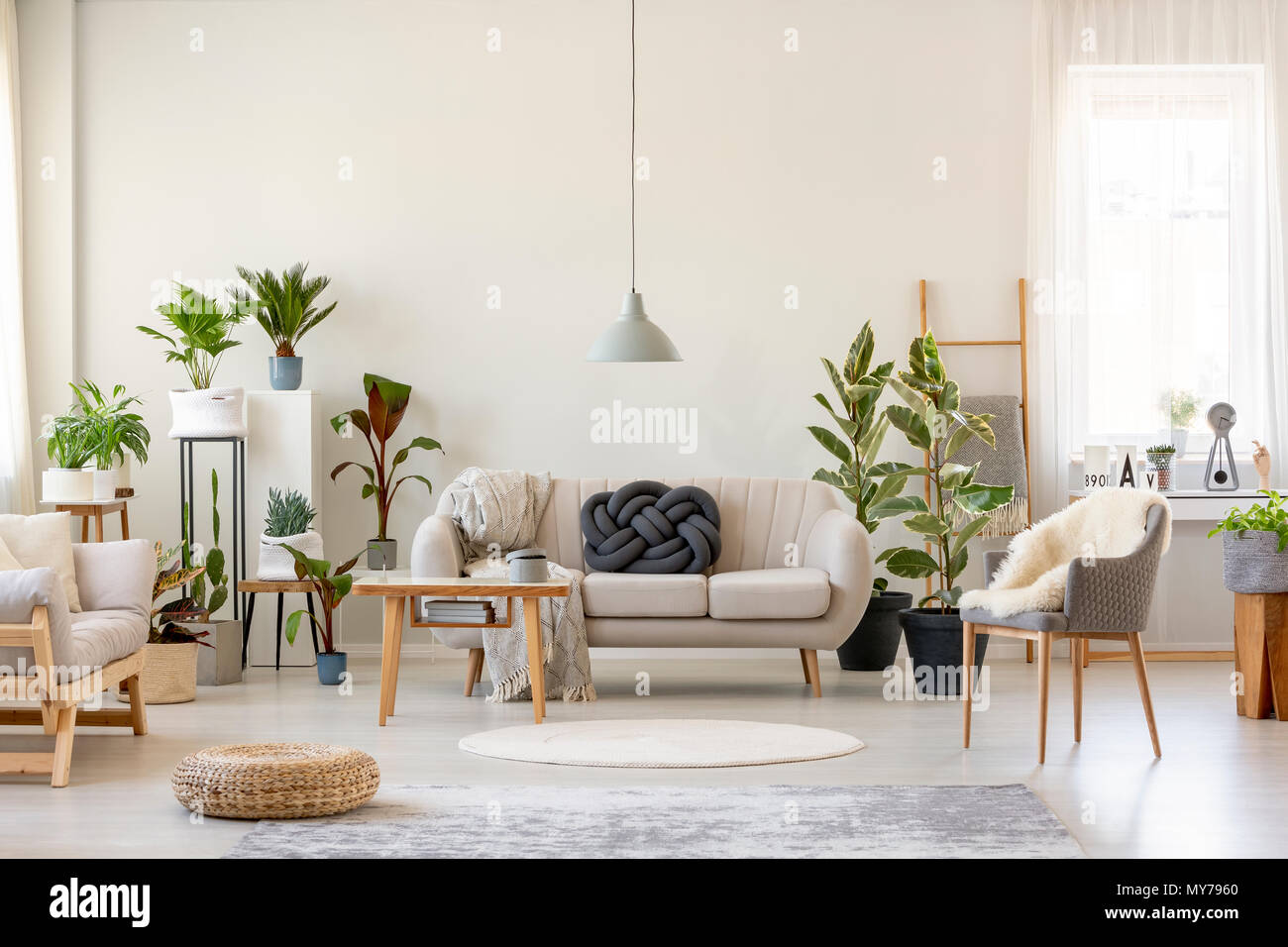 Real photo of a botanic living room interior full of plants with a grey couch standing behind a wooden table and under a lamp, with two chairs on the  Stock Photo