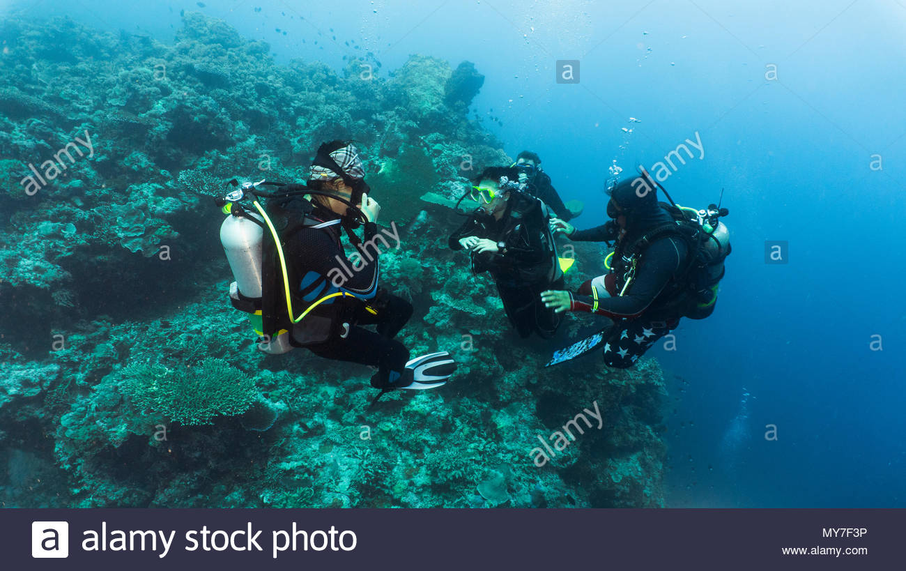 Group of divers performing mandatory safety stop, underwater, Tubbataha Reefs Natural Park, Cagayancillo, Palawan, Philippines - Stock Image