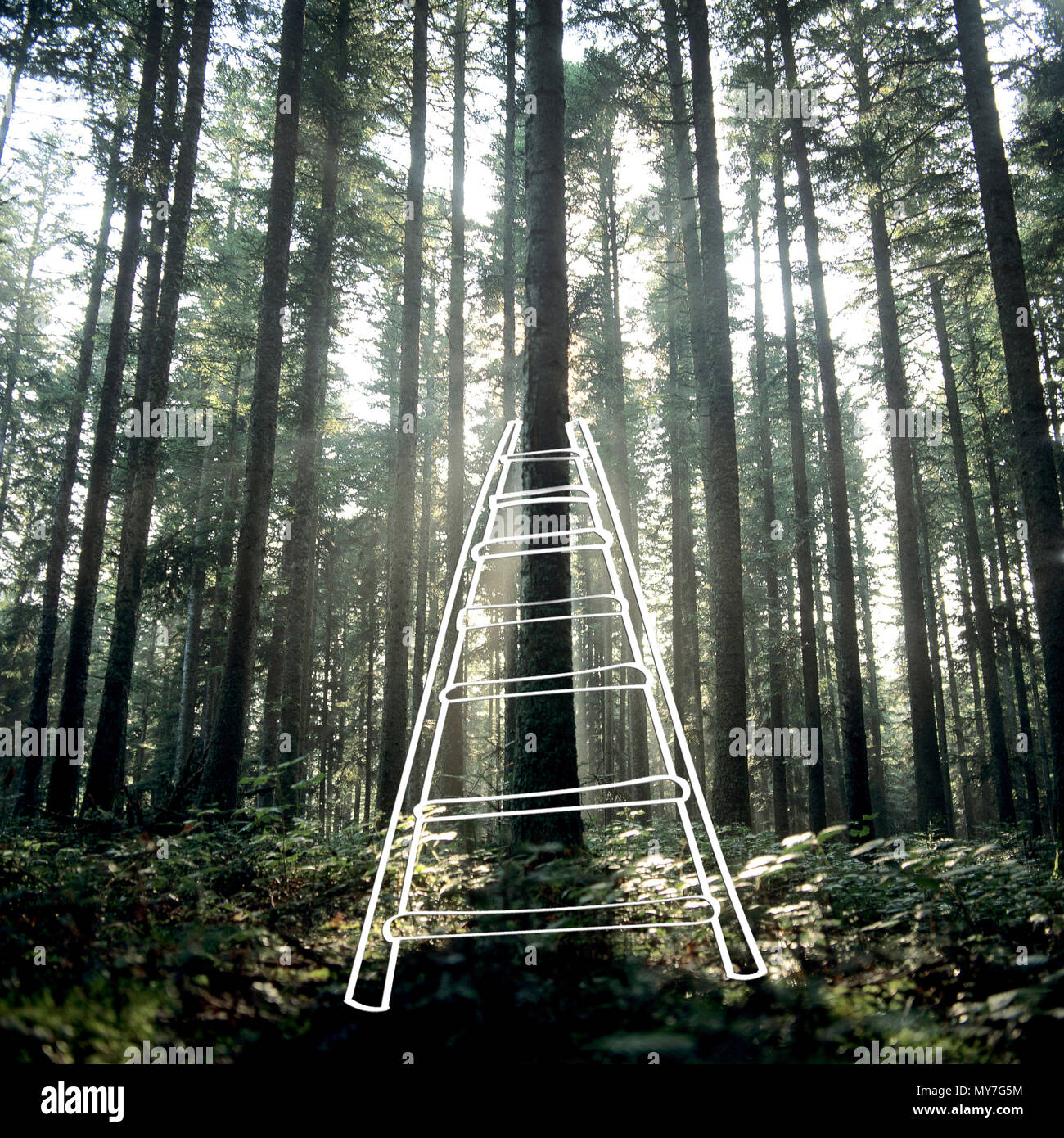 Ladder representation in a forest, France - Stock Image