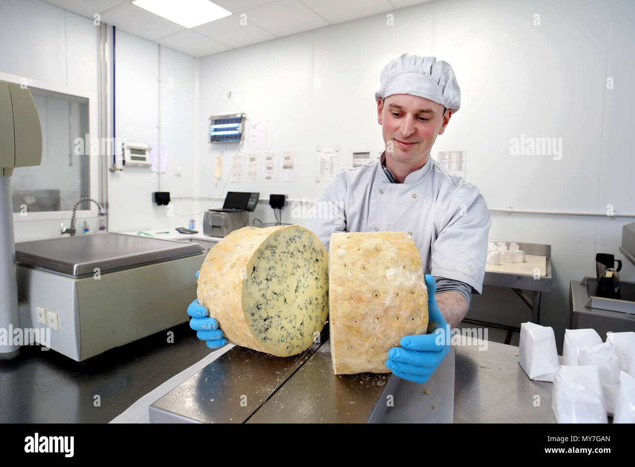 Cheese maker inspecting mould inside large cut wheel of stilton - Stock Image