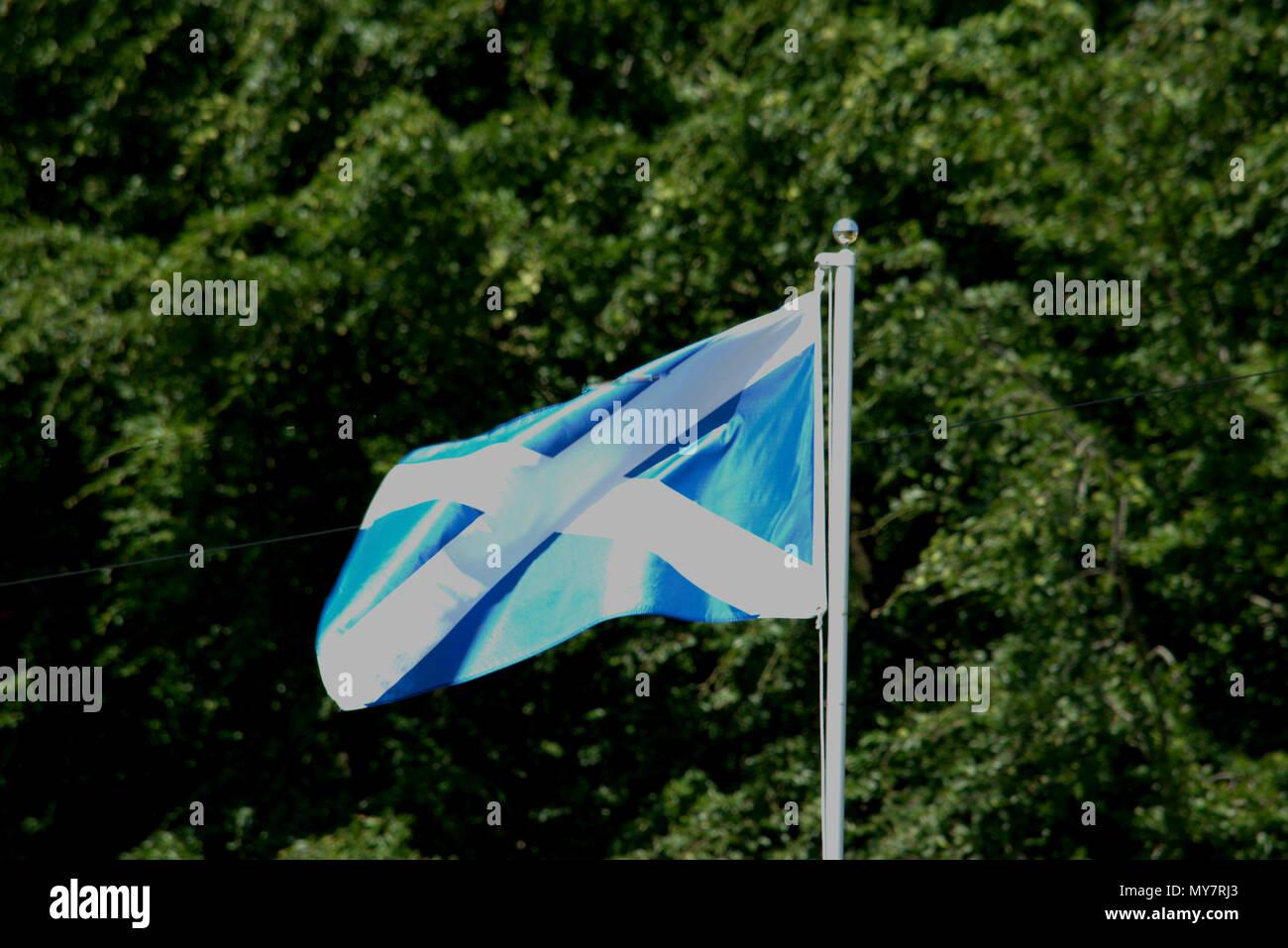 Scottish flag, St. Andrew's cross, the saltire - Stock Image