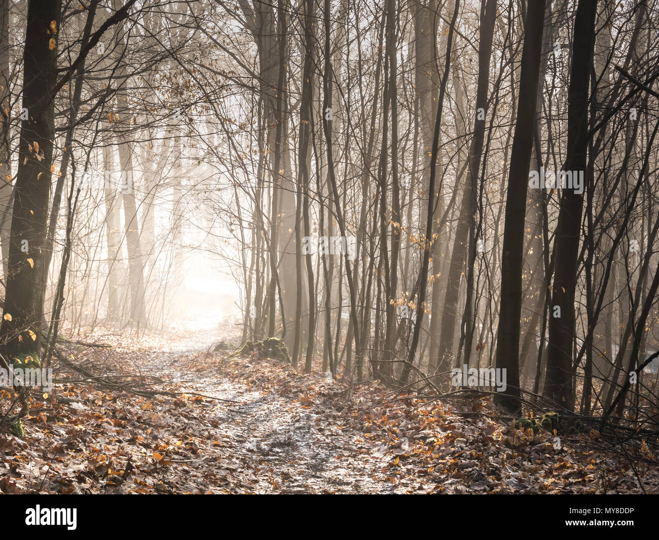 Hiking path leading through an enchanted, mystical looking forest into a light in the distance. (Germany) - Stock Image