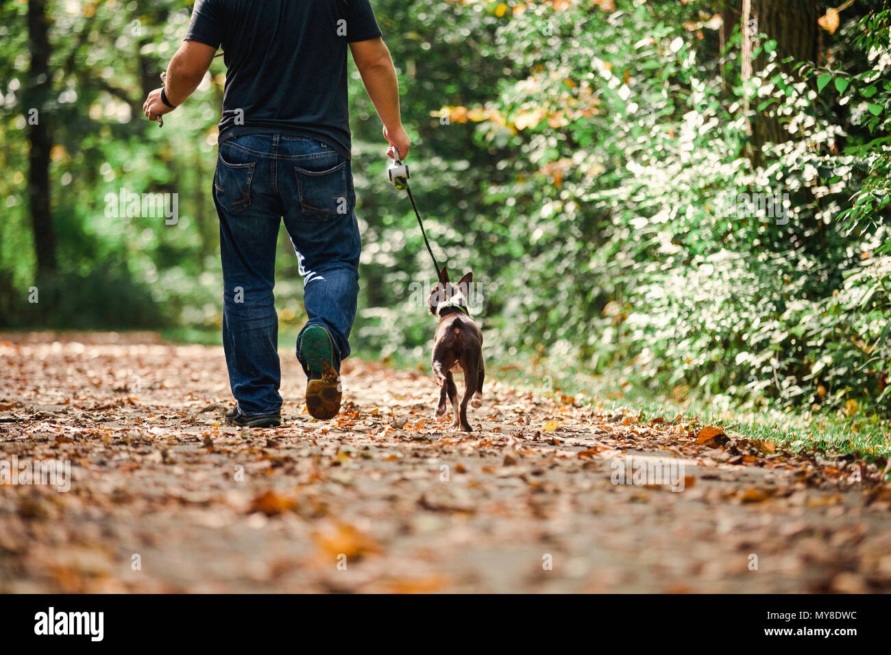 Man walking dog in rural setting, low section, rear view - Stock Image