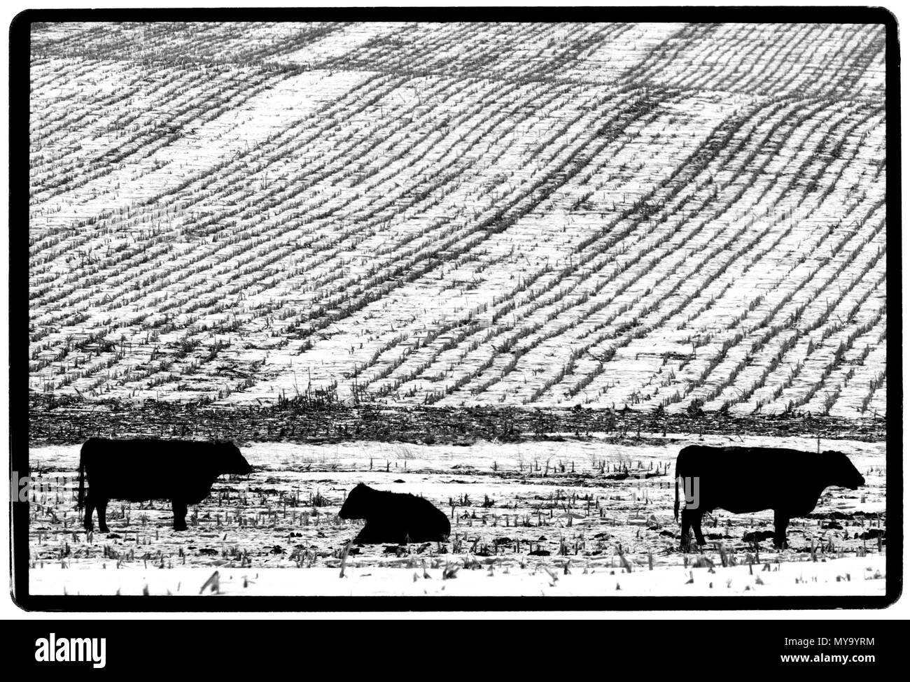 Iowa landscape in winter USA - Stock Image