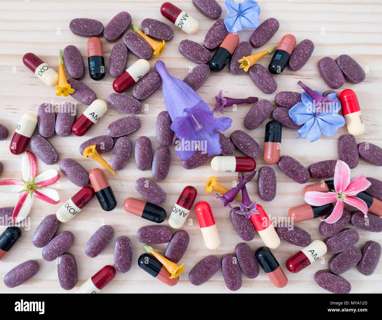 Homeopathy concept image: Amoxicillin and Flucloxacillin antibiotics capsules, flowers and Cranberry tablets on pine table. - Stock Image