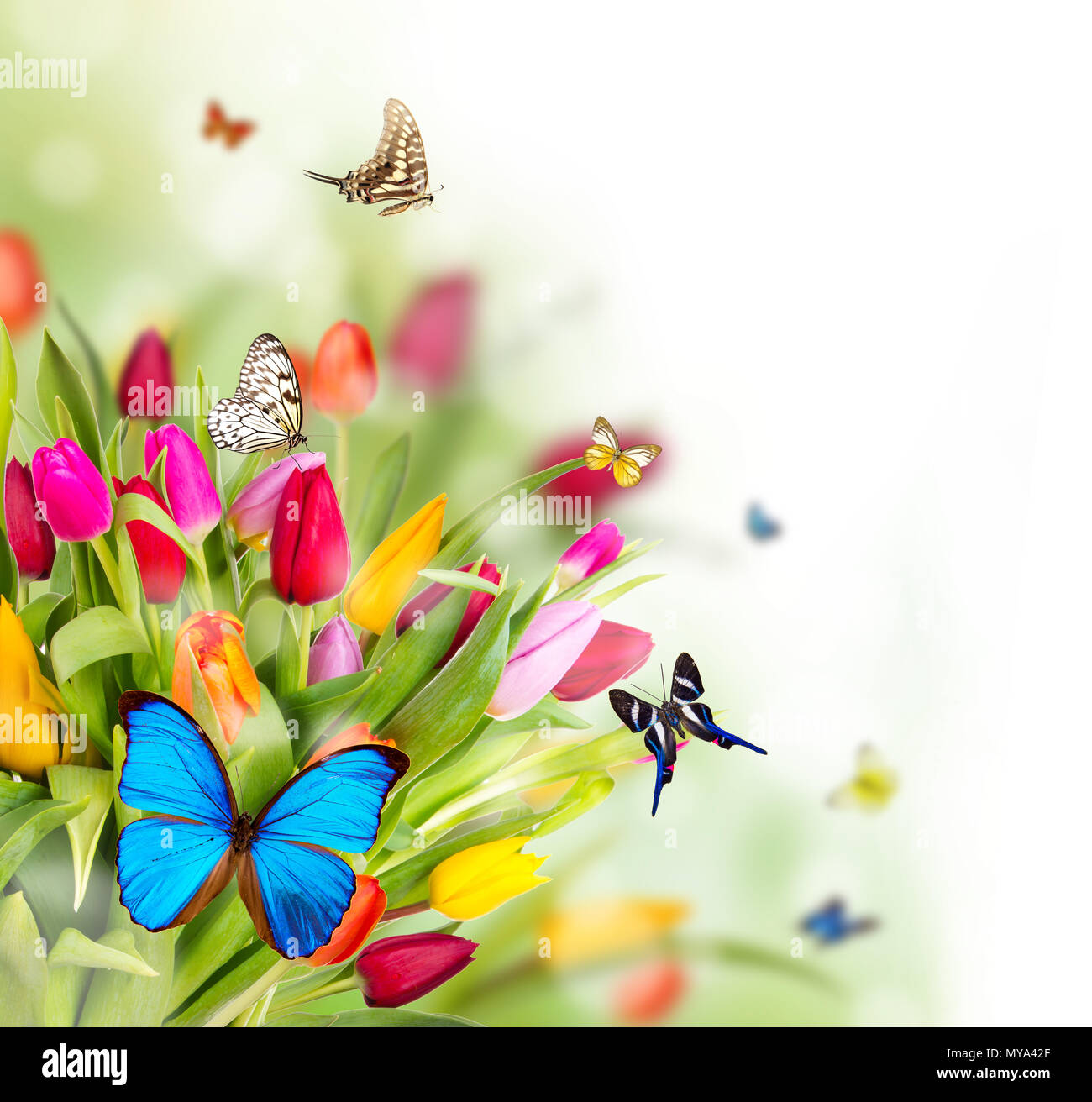Spring, Nature, Flower Butterfly Floral Background Summer