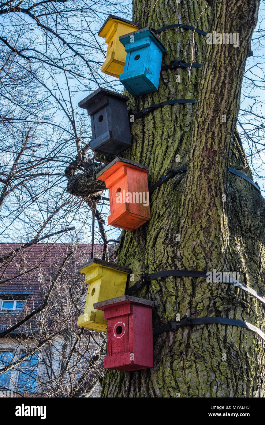 Bird Hotel Collection of bird breeding & nesting boxes tied to tree - Stock Image